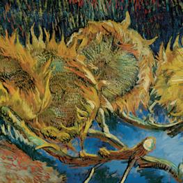 Vier uitgebloeide zonnebloemen